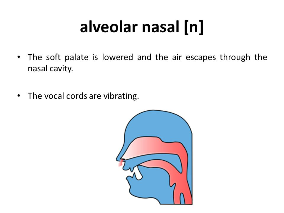 alveolar nasal [n] The soft palate is lowered and the air escapes through the nasal cavity.